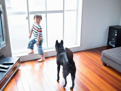 Rating The 7 Best Floors For Dogs We Have Renovated Many Wooden