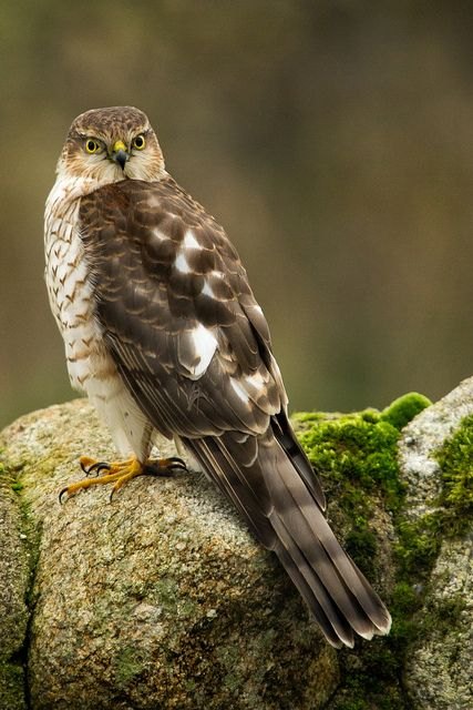 For my momma, she loved Hawks. We would see who could see the next Hawk sitting on telephone poles while driving. Same kind of thing with kids and Bug-cars. Every day I see a Hawk, which is often, I think of my momma!