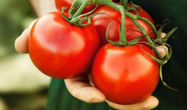 Οφέλη για την υγεία από τη ντομάτα  ☝ Αντι-οξειδωτική: Οι ντομάτες περιέχουν πολλές βιταμίνες , κυρίως Α και C και αυτές οι βιταμίνες δρουν ως αντι-οξειδωτικό, που εργάζονται για την εξουδετέρωση επικίνδυνων ελευθέρων ριζών στο αίμα. Αυτές οι επικίνδυνες ελεύθερες ρίζες μπορούν να προκαλέσουν βλάβη των κυττάρων.... Δείτε περισσότερα