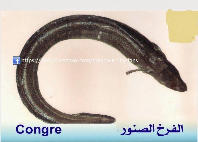 تعريف اسماء الاسماك بدلجة المغربية و الفرنسية البحار المغربي Fish Banana Food
