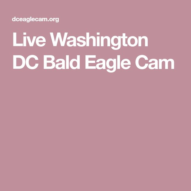 Live Washington DC Bald Eagle Cam
