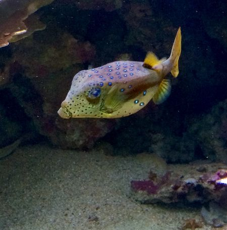Fish Photo by Carl Christian Glosemeyer Andersen — National Geographic Your Shot