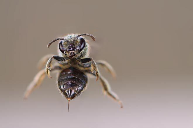 Legenda albinei şi a acului său