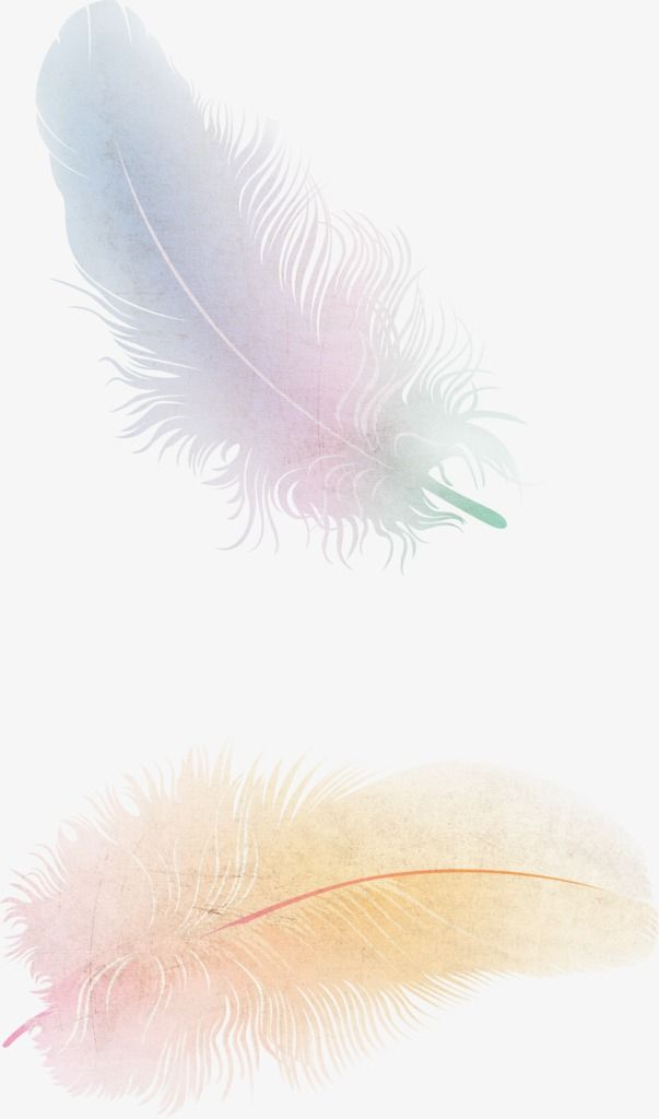 Feather Floating Feather Fine Feathers Png Transparent Clipart