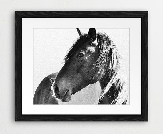 Horse Print Horse Photo Black And White Photography by synplus