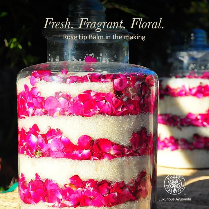 Here's a sneak peek into how our Rose Lip Balm is made. Fresh rose petals and sugar crystals are left to melt in the sun so that they blend naturally!