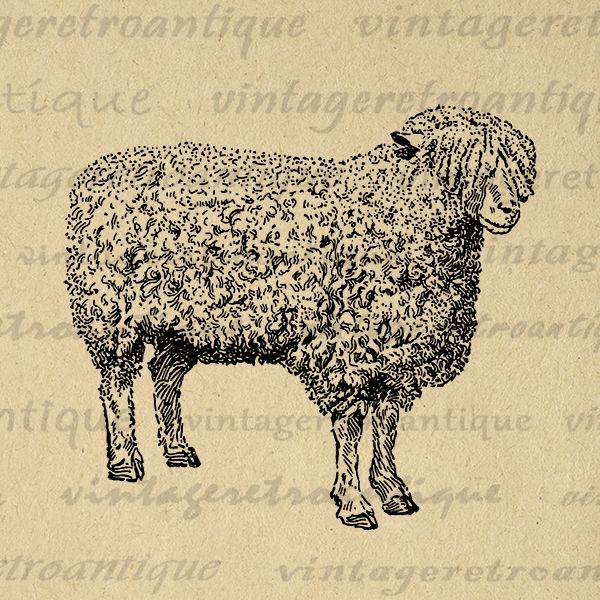 Printable Digital Sheep Graphic Cute Farm Animal Download Cotswold Ewe Sheep Image Illustration Vintage Clip Art Print 300dpi No.3479 @ vintageretroantique.com #DigitalArt #Printable #Art #VintageRetroAntique #Digital #Clipart #Download #Vintage #Antique #Image #Illustration