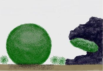 """This illustration shows the three forms that a particular algae species can take in its freshwater lake environment. Our favorite, of course, is the """"lake ball,"""" otherwise known as Marimo moss balls."""
