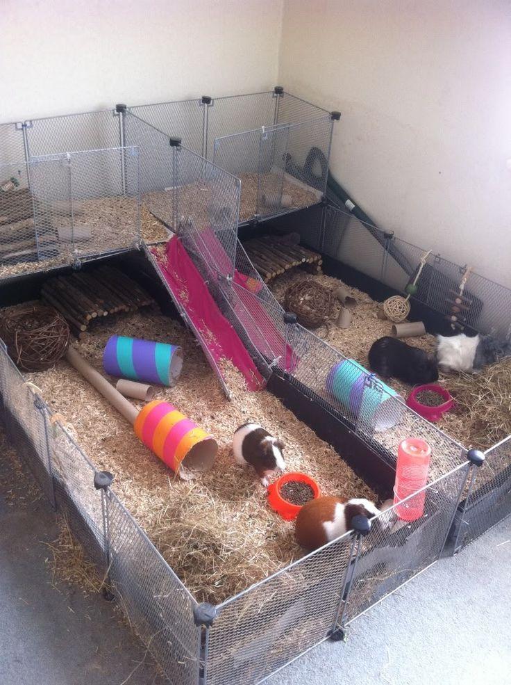 Homemade Guinea Pig Cage Guinea Pigs! Pinterest