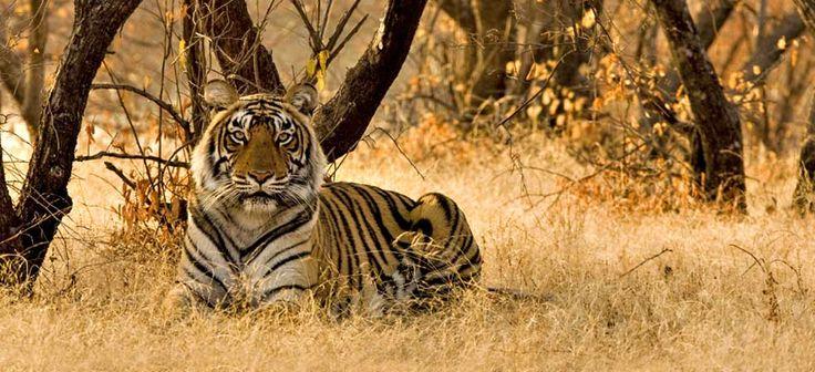 @ Jim Corbett Tour Packages. Jim Corbett 1N/2D Package @ Rs. 3300/- PC. It is best tourist place in north India (uttarakhand ) for safari and activity. More details visit  http://www.shivamtravels.net/jimcorbettpackages.html #jimcorbett #corbettnationalpark #bijrani #Jhirna #landscape #jeepsafari #elephantsafari #safari #india #delhi