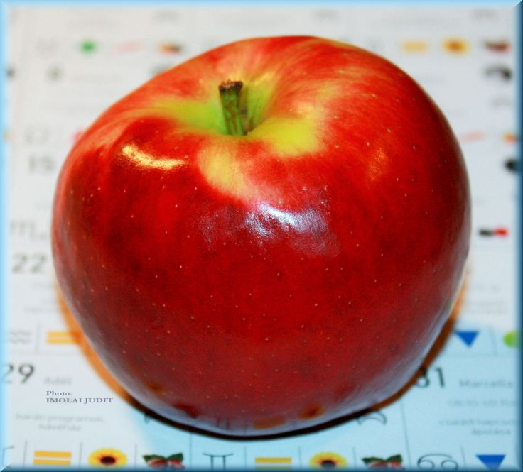 Apple and the MoonCaledar