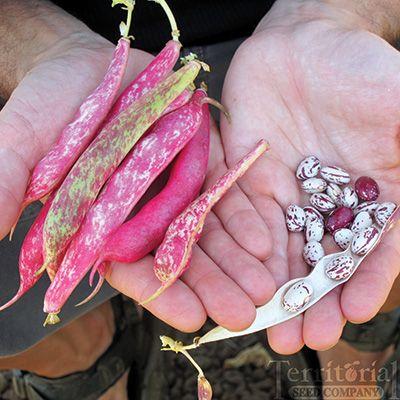 Flambo Bean Conventional & Organic