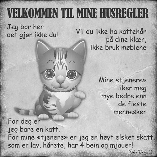 Kattens husregler