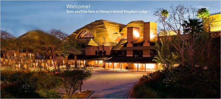 Disney's Animal Kingdom Lodge~37 days!: Walt Disney World, Disney Animal Kingdom, Animal Kingdom Lodges, Animals, Disney World, Orlando Florida, Disney World Resorts, Exotic Animal, Disney Worlds