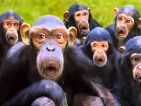 The Happy Birthday Monkeys!!