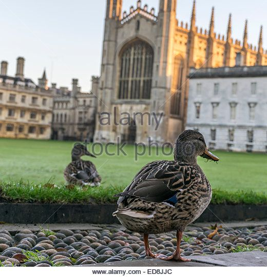 King's College - a duck's eye view