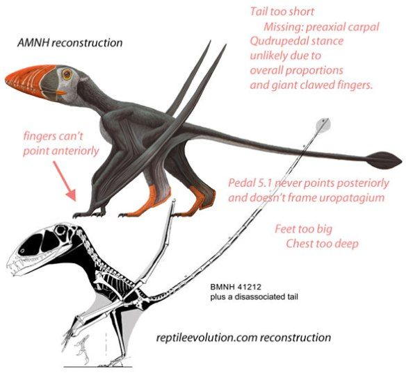 Figure 2.Above: AMNH art for Dimorphodon. Below: from reptile evolution.com. Corrections noted.