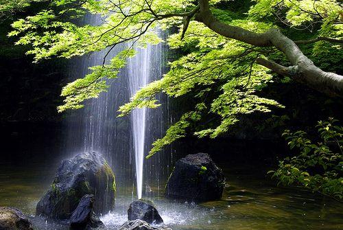 円山公園の新緑