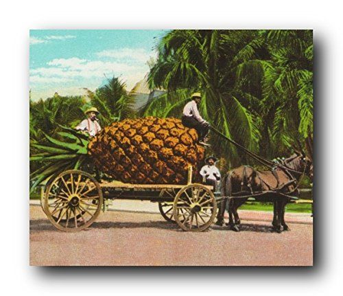 Give an affordable yet chic makeover to your home especially to your dinning or kitchen area with this amazing pineapple fruit cart & trees scenery wall art print poster. This wonderful poster depicts the image of big pineapple loaded on the stage coach which makes a perfect accompaniment your dining area. It would also make a fabulous gift for those who love to collect fruit pictures.
