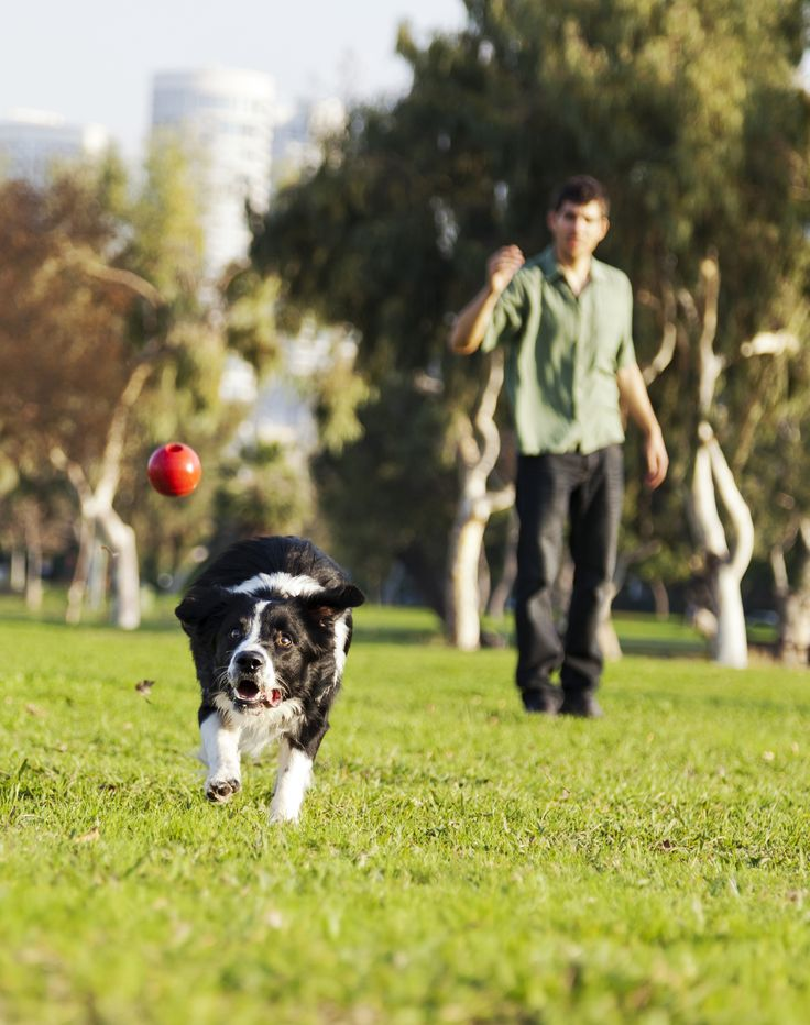 Fetch tag and other fun activities to exercise both you and your dog.
