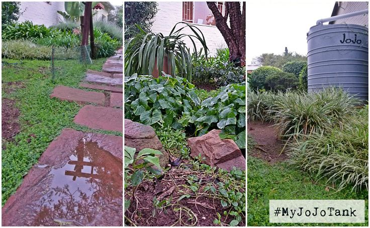 Oooh... It's a wet and chilly Jozi morning. Although last night's downpour added just a small amount of water to our JoJo, we still woke up to a gorgeous, rain soaked garden this morning. Don't you just love the smell of fresh rain?