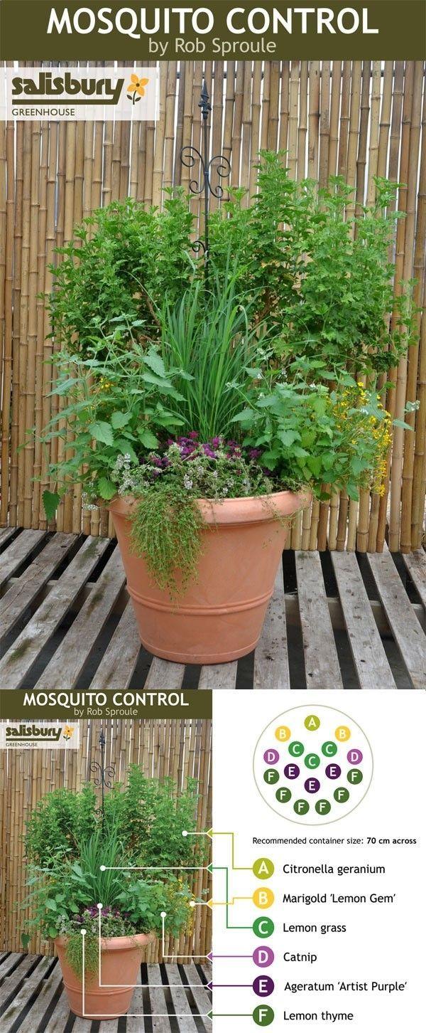 ein Kräutertopf für die Terrasse mit Pflanzen, die Mücken anscheinend nicht mögen