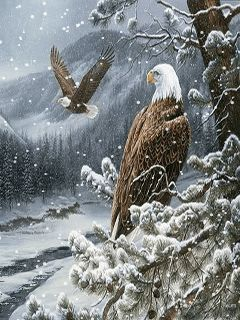 Download Animated 240x320 «Eagles» Cell Phone Wallpaper. Category: Pets & Animals