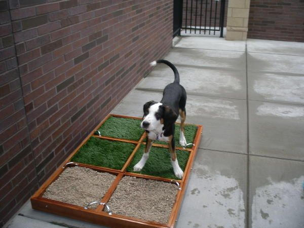 Balcony Ideas For Pets Pet Patio Potty Not Just For