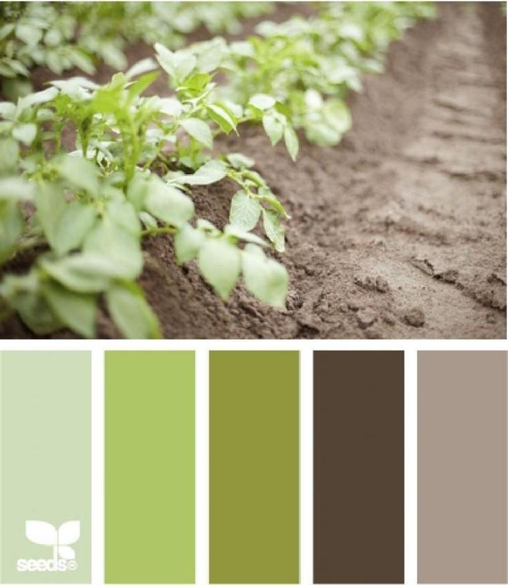20 best farrow images on pinterest paint colors living - The color sage green ...