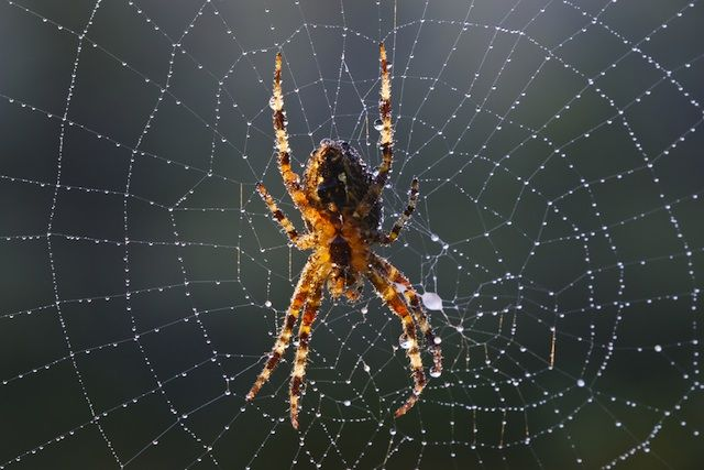Why Do Spiders Spin Webs What Are Spider Webs Made Of