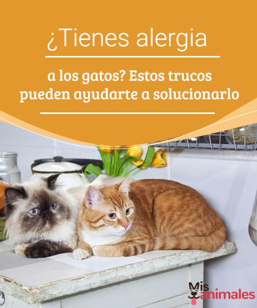 ¿Tienes alergia a los gatos? Estos trucos pueden ayudarte a solucionarlo   La alergia a los gatos es una de las peores cosas que le puede ocurrir a alguien. Aquí mostramos trucos que te pueden ser muy útiles. #alergia #gato #trucos #consejos