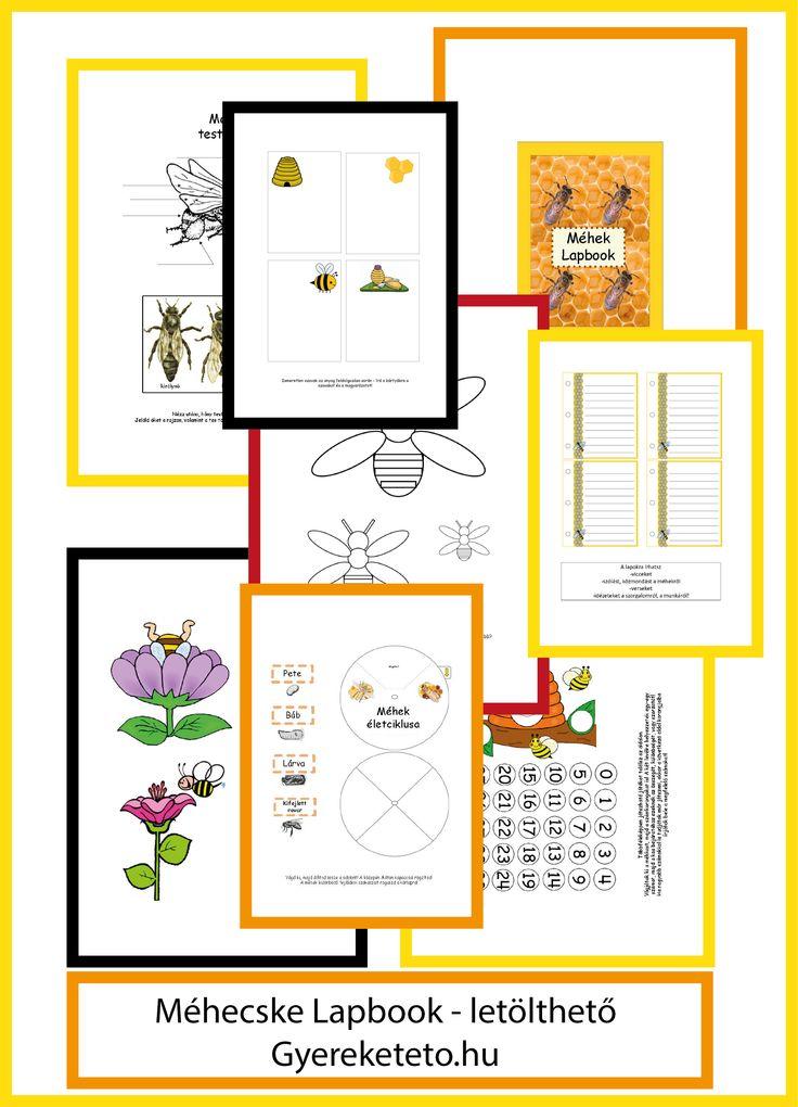 Méhecske lapbook-letölthető