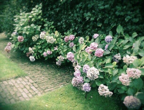 Border met hortensia's half augustus