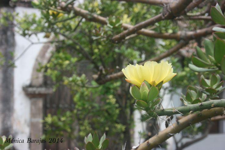 Flor de patilon