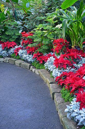 Beautiful botanical garden during the christmas season