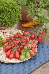 Sind Tomaten Obst oder Gemüse?