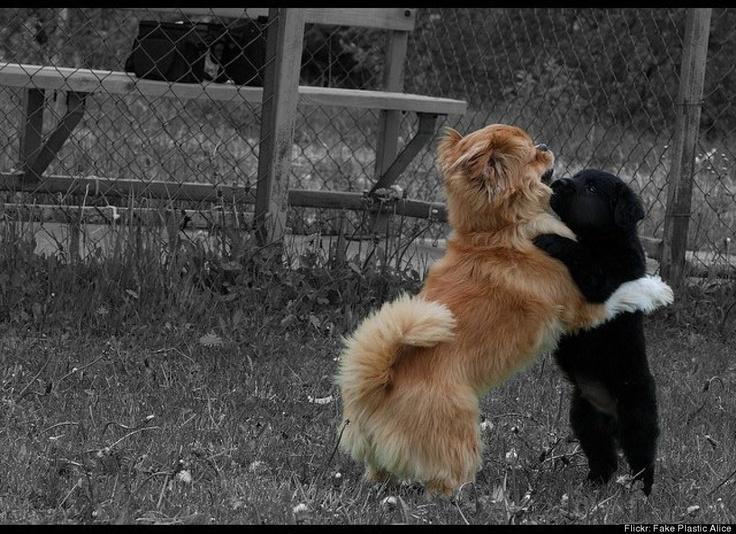 Animal Hugs Are Better Than Regular Hugs (PHOTOS)