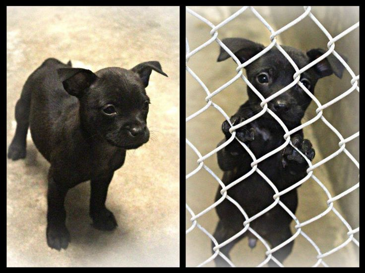 Free Dogs In Odessa Tx