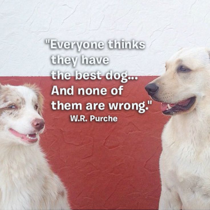 Best Animal Quotes We Love Images On Pinterest Dog Stuff - 20 reasons why you should be thankful to have a dog