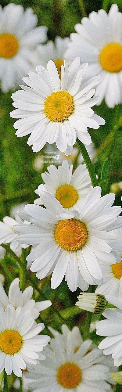 Statement Clutch - Sunny Daisies by VIDA VIDA Vaf6U