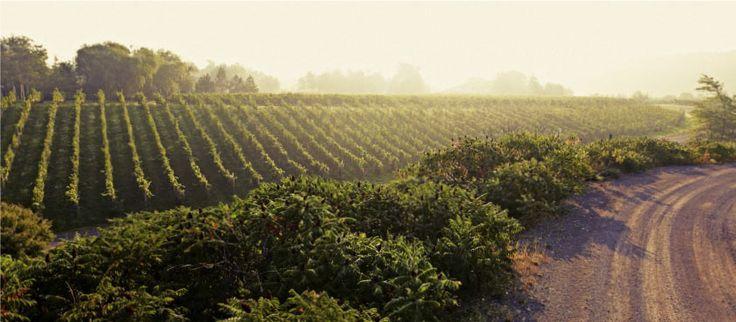 Malivoire Winery
