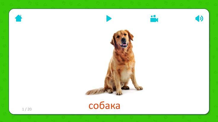 Карточки для детей - Собака (Dog) - Домашние животные. Бесплатная установка приложения для iOS и Android: http://onelink.to/flashcardsforkid