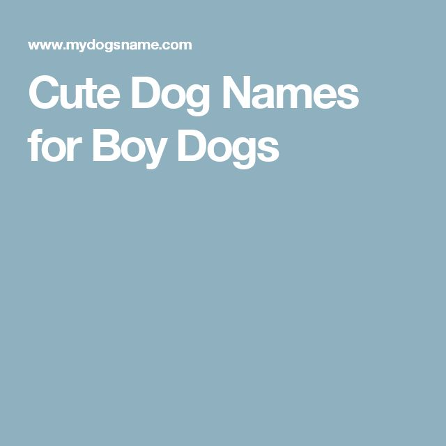 Cute Dog Names for Boy Dogs