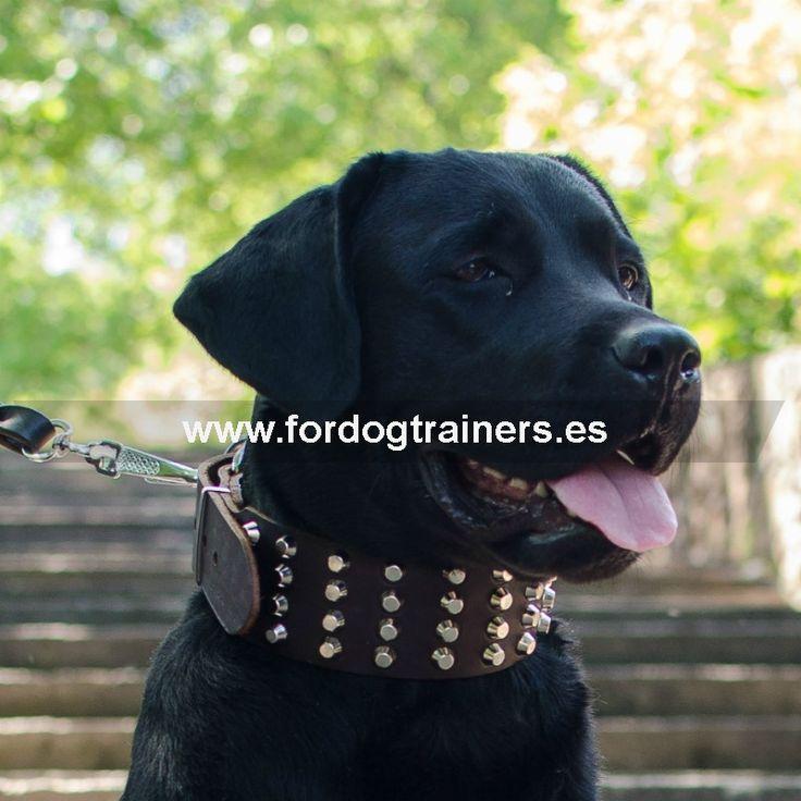 """Collar para raza Labrador de cuero ancho «Regalo adornado» @fordogtrainers.es No dejes de hacer clic """"me gusta"""""""