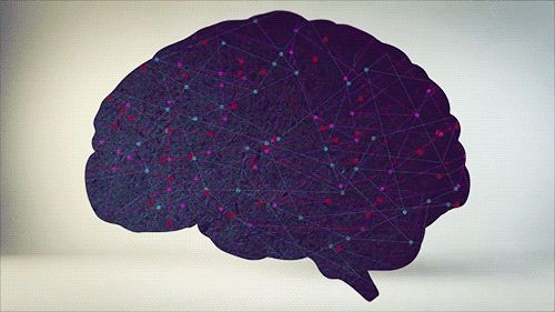 """""""On a per weight basis, humans pack in more neurons than any other species. That's what makes us so smart!"""" - Via TED Ed. #socialscience"""