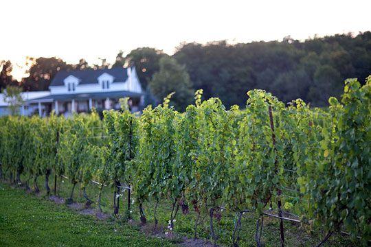 Vineyard at Featherstone Estate Winery