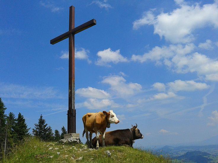 Kühe und Gipfelkreuz