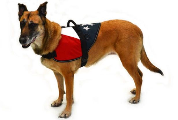Therapy dog in training vest is probably a quarantine, however this works well. Puppies are territorial pet. When thieves reach their area, they'll warn them. The issue is they can't separate the real intruders and allowed guests.
