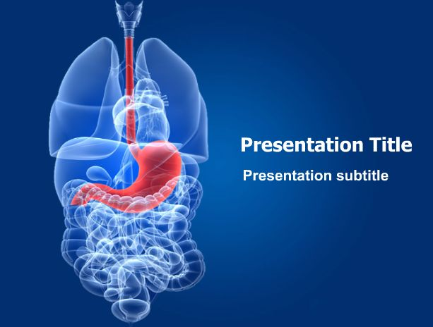 Human stomach powerpoint template this stunning for Anatomy ppt templates free download