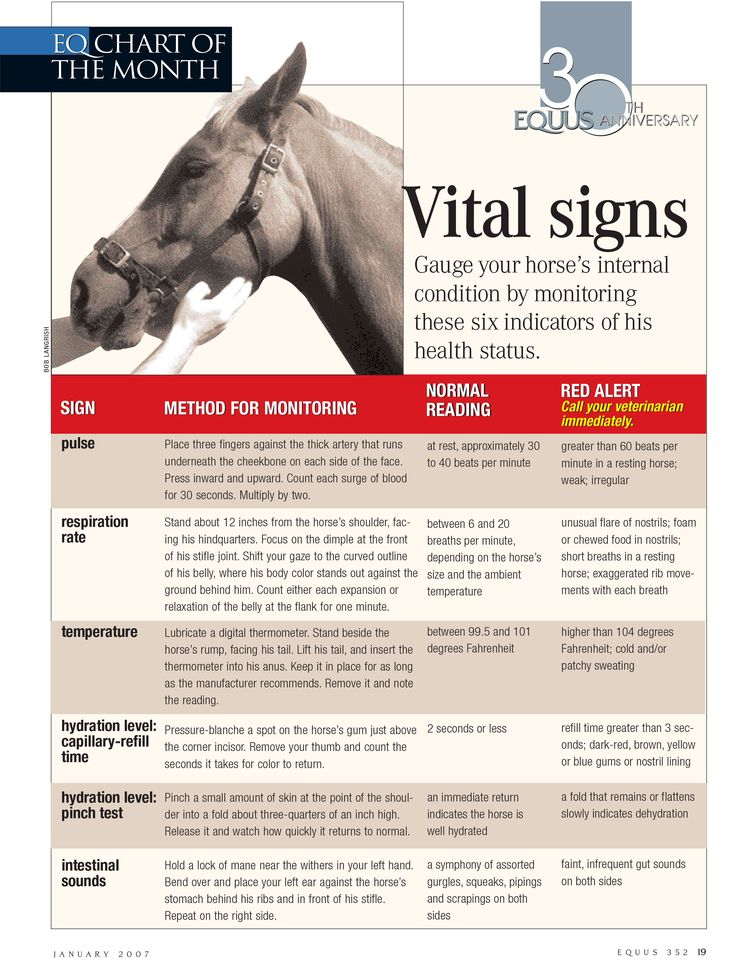 Gauge your horse's internal condition with the help of this vital signs chart